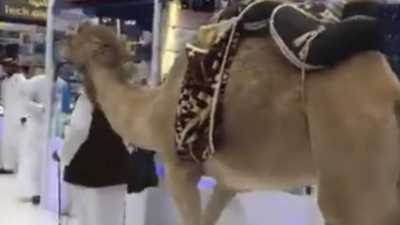 Video: Saudi goes SIM shopping with camel in mall