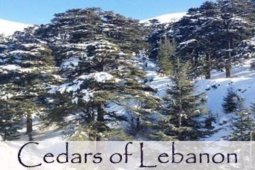CEDARS Of GOD, Language Of The Spirit